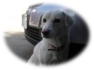 ブルースター番犬「チャコ」